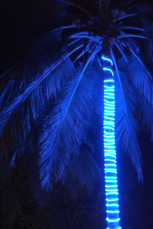 Low light focus improvement - Blue LED lighting up a coconut tree